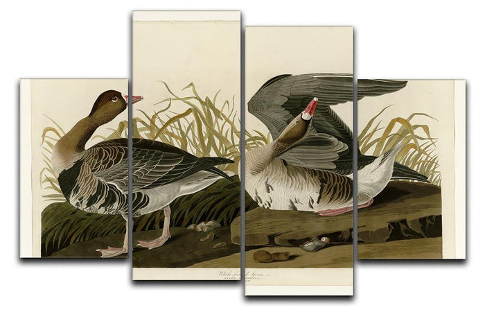 White fronted Goose by Audubon 4 Split Panel Canvas