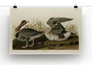 White fronted Goose by Audubon Canvas Print or Poster - Canvas Art Rocks - 2