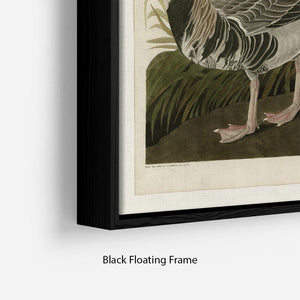 White fronted Goose by Audubon Floating Frame Canvas - Canvas Art Rocks - 2