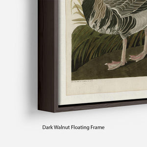 White fronted Goose by Audubon Floating Frame Canvas - Canvas Art Rocks - 6