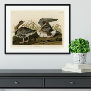 White fronted Goose by Audubon Framed Print - Canvas Art Rocks - 1