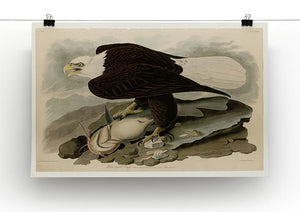 White headed Eagle by Audubon Canvas Print or Poster - Canvas Art Rocks - 2