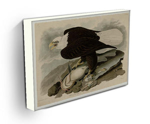 White headed Eagle by Audubon Canvas Print or Poster - Canvas Art Rocks - 3