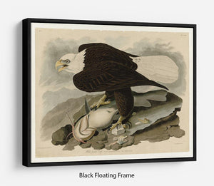 White headed Eagle by Audubon Floating Frame Canvas - Canvas Art Rocks - 1