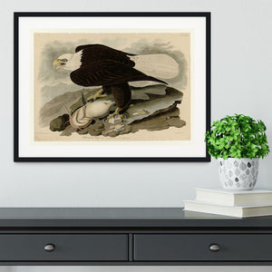 White headed Eagle by Audubon Framed Print - Canvas Art Rocks - 1