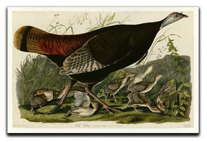 Wild Turkey 2 by Audubon Canvas Print or Poster - Canvas Art Rocks - 1