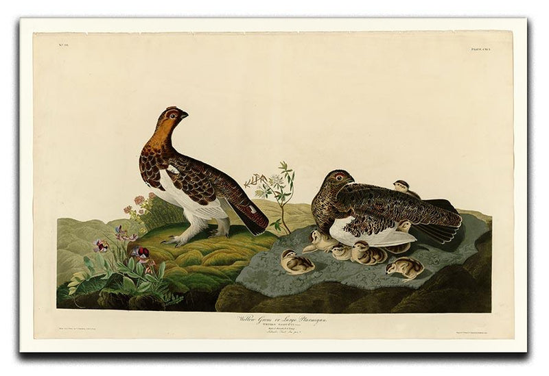 Willow Grouse by Audubon Canvas Print or Poster - Canvas Art Rocks - 1