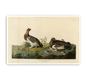 Willow Grouse by Audubon HD Metal Print - Canvas Art Rocks - 1