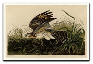 Winter Hawk by Audubon Canvas Print or Poster - Canvas Art Rocks - 1