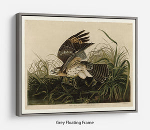 Winter Hawk by Audubon Floating Frame Canvas - Canvas Art Rocks - 3