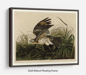Winter Hawk by Audubon Floating Frame Canvas - Canvas Art Rocks - 5