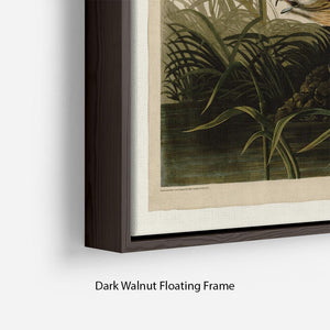 Winter Hawk by Audubon Floating Frame Canvas - Canvas Art Rocks - 6