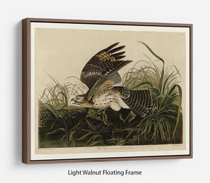 Winter Hawk by Audubon Floating Frame Canvas - Canvas Art Rocks 7