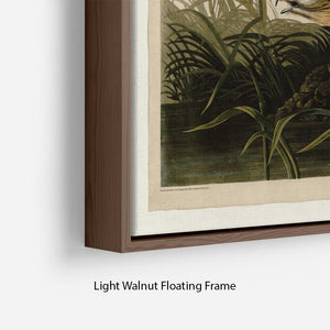 Winter Hawk by Audubon Floating Frame Canvas - Canvas Art Rocks - 8
