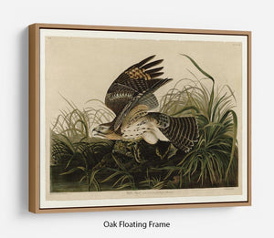 Winter Hawk by Audubon Floating Frame Canvas - Canvas Art Rocks - 9