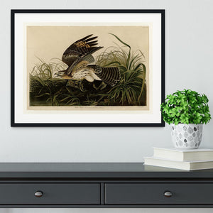 Winter Hawk by Audubon Framed Print - Canvas Art Rocks - 1