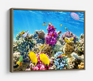 Wonderful and beautiful underwater HD Metal Print