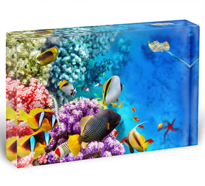 World with corals and tropical fish Acrylic Block - Canvas Art Rocks - 1