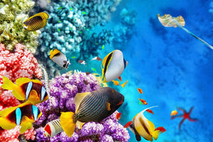 World with corals and tropical fish Wall Mural Wallpaper - Canvas Art Rocks - 1
