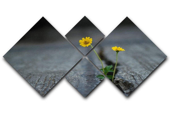 Yellow flower growing in street 4 Square Multi Panel Canvas