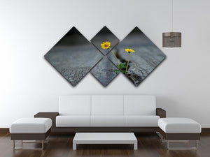 Yellow flower growing in street 4 Square Multi Panel Canvas  - Canvas Art Rocks - 3