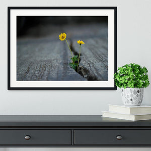Yellow flower growing in street Framed Print - Canvas Art Rocks - 1