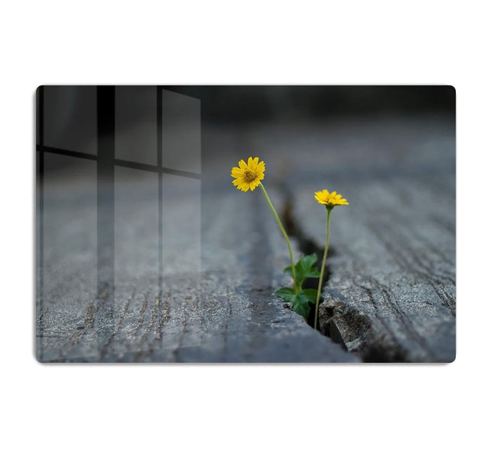 Yellow flower growing in street HD Metal Print