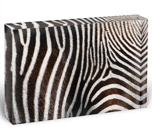 Zebra Fur Acrylic Block - Canvas Art Rocks - 1