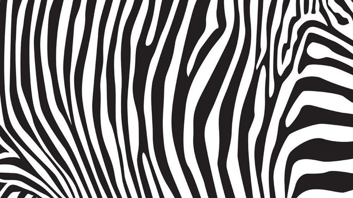 Zebra stripes pattern Wall Mural Wallpaper