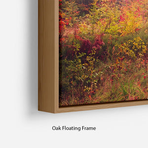 autumn trees in forest Floating Frame Canvas