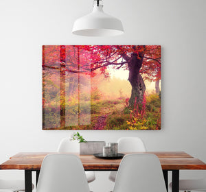 autumn trees in forest HD Metal Print