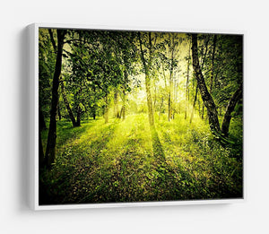 deep forest on summer morning HD Metal Print