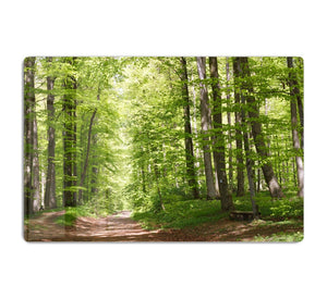 forest during spring HD Metal Print
