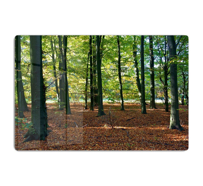 forrest edge in autumn HD Metal Print
