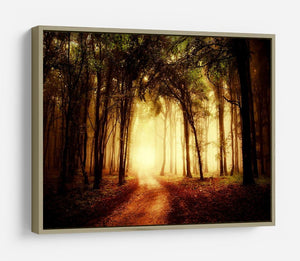 golden forest at autumn HD Metal Print