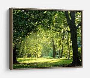 trees in a summer forest HD Metal Print