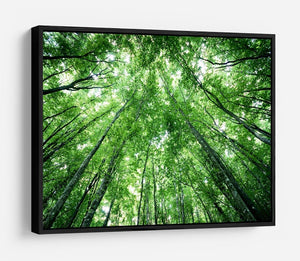 trees meeting eachother at the sky HD Metal Print