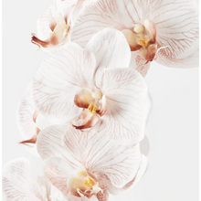 Load image into Gallery viewer, Jardin Orchid Stem Latte