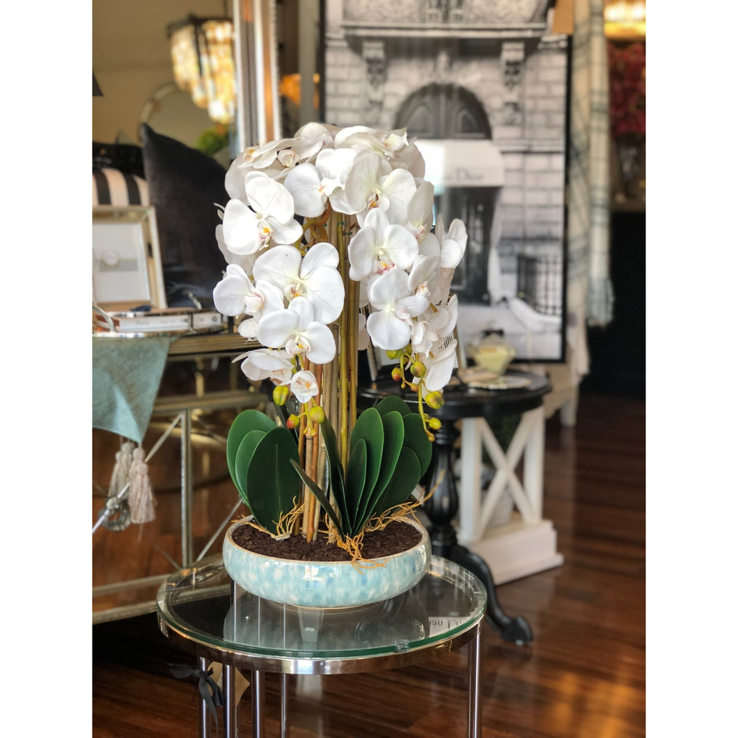 Luxor Blanc Orchid Plant - Maison De Luxe French Interiors