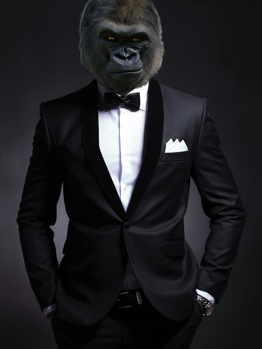 Suit up Silverback