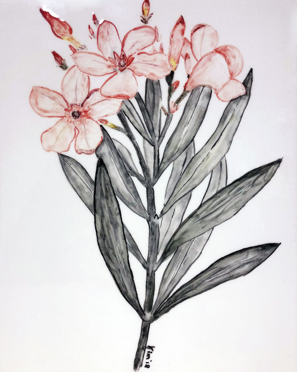 Oleander | Flowers | Still life |  | Giclée Print on Hahnemühle | Art Poster | Wall Art