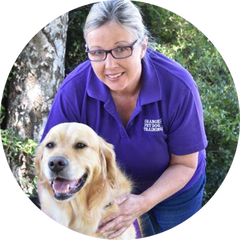Pam Davis -Orange Pet Dog Training with Bono, Golden Retriever