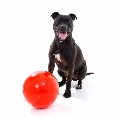 Aussie Dog Staffie Ball