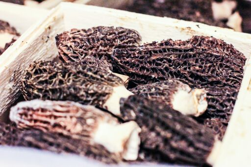 Morel Mushrooms (Morchella Esculenta) Dried and Fresh