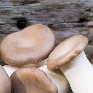 exotic eryngii king oyster fresh mushrooms uk delivery