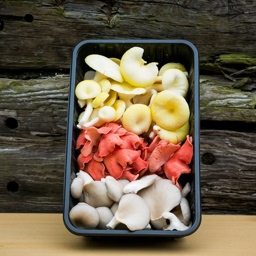 Oyster Mushroom Mix (Pink, Yellow, Grey)