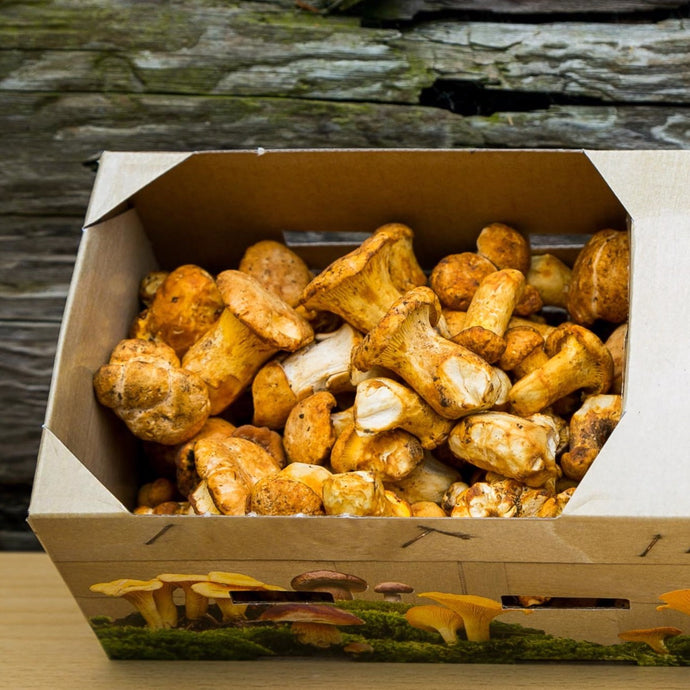 Fresh Wild Girolle Mushrooms (Golden Chanterelle)