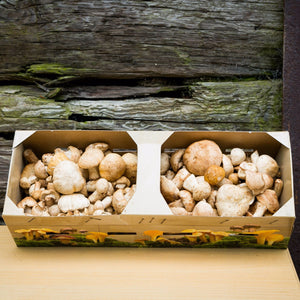 Fresh Wild St George Mushrooms (Calocybe Gambosa)