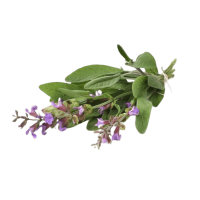 Purple Comfrey Flowers With Green Stems