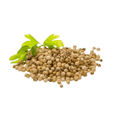 Brown Coriander Seeds With Green Cilantro Leaves On White Background